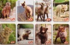 PANINI-AMICI CUCCIOLOTTI Mission amoureux des animaux autocollants Nº 257
